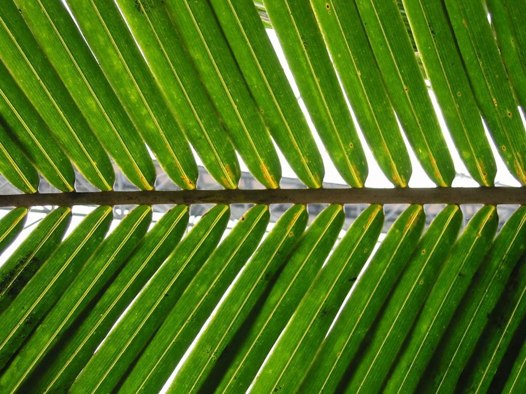 palm-sunday-2
