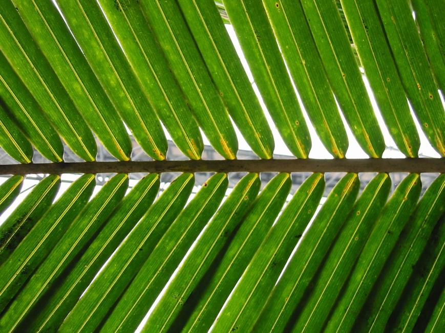 palm-sunday-2